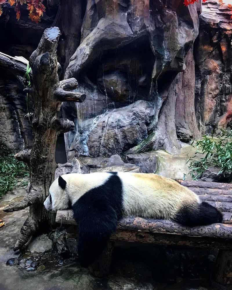 r-beijing-zoo-1
